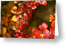 Some Red Berries II Greeting Card