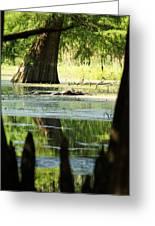 Some Turtles At Radium Springs Creek Greeting Card