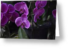 Some Very Beautiful Purple Colored Orchid Flowers Inside The Jurong Bird Park Greeting Card
