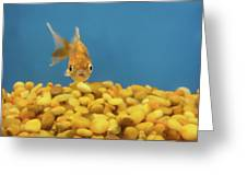 Something Fishy Greeting Card by Donna Blackhall