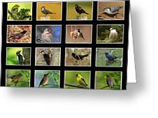 Song Birds Of Canada Collection Greeting Card