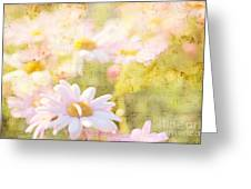 Song Of Spring I - Lovely Soft Pink Daisies Greeting Card
