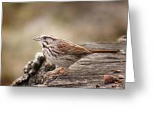 Song Sparrow On Stump Greeting Card