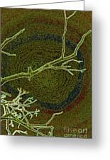 Songbird Green Greeting Card
