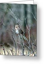 Songs Of Sparrows Greeting Card