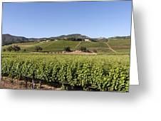 Sonoma County Vineyards Greeting Card