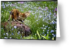 Sonoma In The Wildflowers Greeting Card