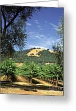 Sonoma Valley Vineyard Greeting Card