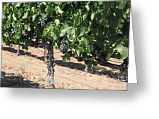 Sonoma Vineyards In August In The Sonoma California Wine Country 5d24487 Greeting Card by Wingsdomain Art and Photography