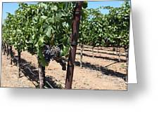 Sonoma Vineyards In The Sonoma California Wine Country 5d24490 Greeting Card