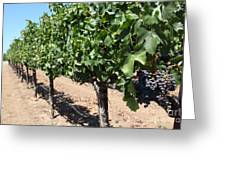 Sonoma Vineyards In The Sonoma California Wine Country 5d24491 Greeting Card