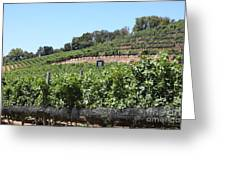 Sonoma Vineyards In The Sonoma California Wine Country 5d24503 Greeting Card by Wingsdomain Art and Photography