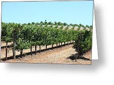 Sonoma Vineyards In The Sonoma California Wine Country 5d24506 Greeting Card