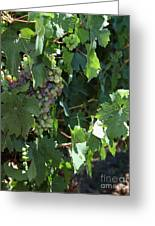 Sonoma Vineyards In The Sonoma California Wine Country 5d24510 Vertical Greeting Card