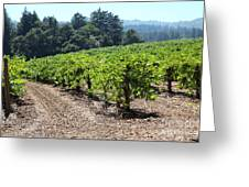 Sonoma Vineyards In The Sonoma California Wine Country 5d24512 Greeting Card