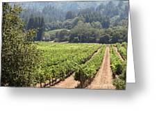 Sonoma Vineyards In The Sonoma California Wine Country 5d24515 Square Greeting Card