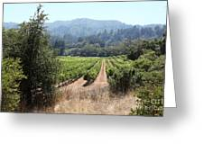 Sonoma Vineyards In The Sonoma California Wine Country 5d24516 Greeting Card