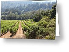 Sonoma Vineyards In The Sonoma California Wine Country 5d24518 Greeting Card