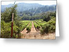 Sonoma Vineyards In The Sonoma California Wine Country 5d24521 Greeting Card