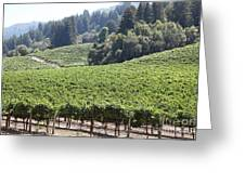 Sonoma Vineyards In The Sonoma California Wine Country 5d24539 Greeting Card