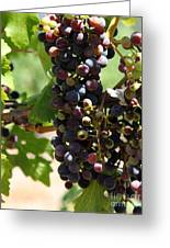 Sonoma Vineyards In The Sonoma California Wine Country 5d24572 Vertical Greeting Card