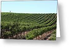 Sonoma Vineyards In The Sonoma California Wine Country 5d24588 Greeting Card