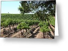 Sonoma Vineyards In The Sonoma California Wine Country 5d24594 Greeting Card