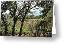 Sonoma Vineyards In The Sonoma California Wine Country 5d24622 Greeting Card