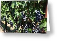 Sonoma Vineyards In The Sonoma California Wine Country 5d24629 Greeting Card