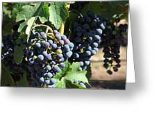 Sonoma Vineyards In The Sonoma California Wine Country 5d24630 Square Greeting Card