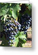 Sonoma Vineyards In The Sonoma California Wine Country 5d24630 Vertical Greeting Card