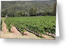 Sonoma Vineyards In The Sonoma California Wine Country 5d24632 Greeting Card