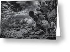 Sonoran Desert 15 Greeting Card