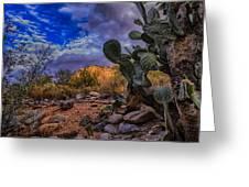 Sonoran Desert 54 Greeting Card