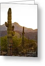 Sonoran Desert II Greeting Card by Robert Bales