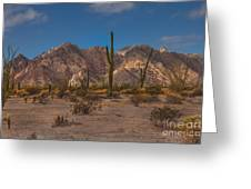 Sonoran  Greeting Card