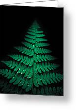 Soothing Fern Greeting Card