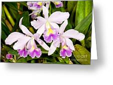 Sophronitis Orchid Greeting Card