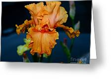 Soprano Iris Greeting Card