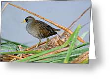 Sora Rail Greeting Card
