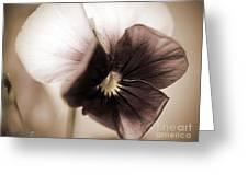Sorbet Viola Greeting Card
