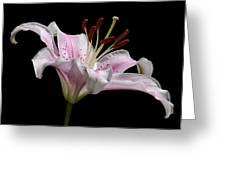 Sorbonne Lily-0002 Greeting Card