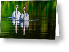 Soulmate Swans Greeting Card