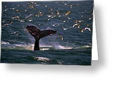 Sounding Humpback Greeting Card