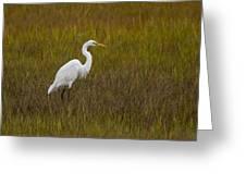 Soundside Park Topsail Island Egret Greeting Card