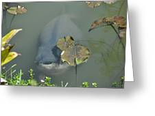 #south American Pacu Greeting Card