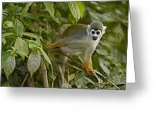 South American Squirrel Monkey Amazonia Greeting Card