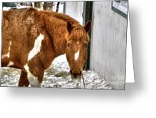 South Barrington Horse 2 Greeting Card