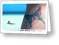 South Beach Wild Life Greeting Card by Mike McGlothlen