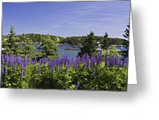 South Bristol And Lupine Flowers On The Coast Of Maine Greeting Card